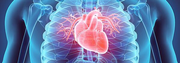 American Heart Roundup_email