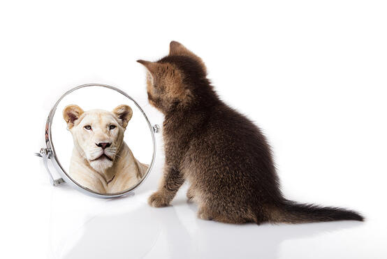 Cat looking in mirror with lion in reflection